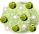Laboratory Animal Allergy (LAA) Icon (Color)